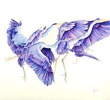 Blue Herons #2 in flight by Rich Sigberman