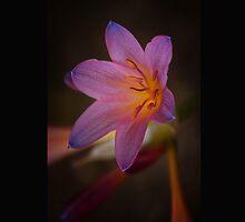 Flower1 by Dan  Wampler