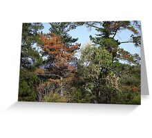 Rustic colours in trees Greeting Card