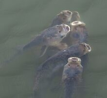 Six Fish Feeding by DowdellPhoto