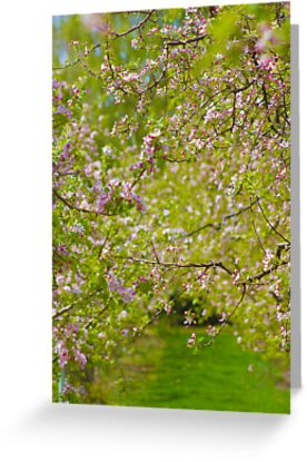 A walk among blossoms by Aimee Stewart