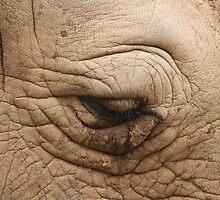 Eye of the Rhino by v-something