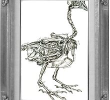 framed chicken skeleton by Ashley Peppenger