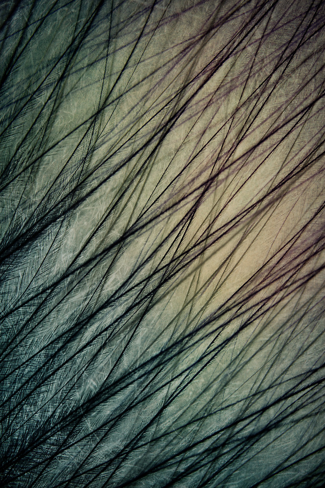 Feathered III by Sharon Johnstone