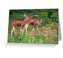 Twin Moose Babies Greeting Card