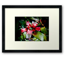 Red Bromeliad with Symbiote Framed Print