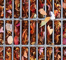A grate filled with autumn by Joel Bramley