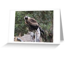 Here's Looking At You Kiddo  Wedge Tailed Eagle Canberra Australia  Greeting Card