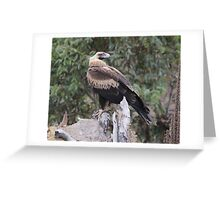 Do You Mind I am Busy  Wedge Tailed Eagle Canberra Australia  Greeting Card