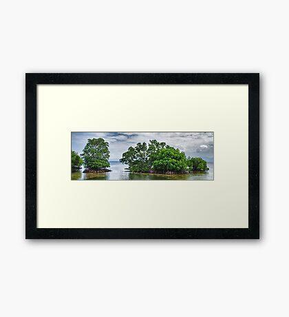 Mangrove Dreams Framed Print