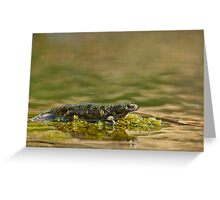 Triturus marmoratus Greeting Card