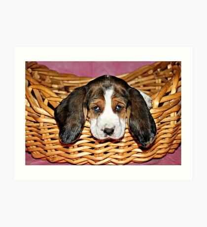 Bassethound Puppy in a Basket Art Print