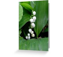 Fragrant lily of the valley Greeting Card