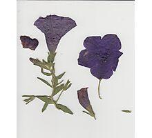 Pressed Flowers Photographic Print