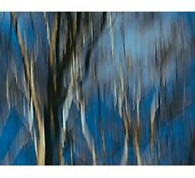 Abstract ~ Trees Photographic Print