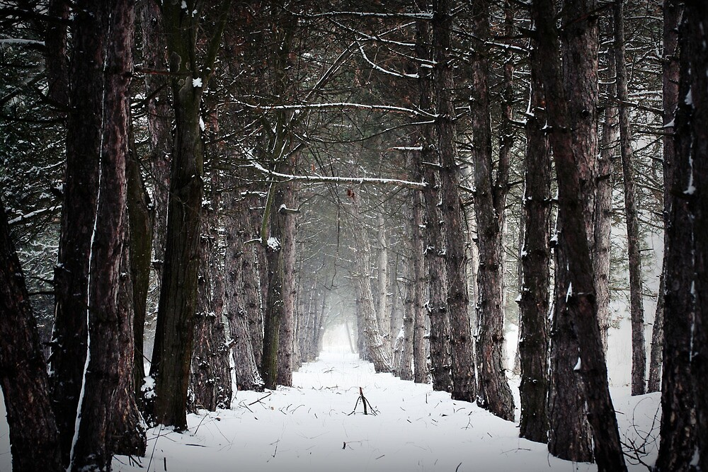 enchanted woods by passerby2
