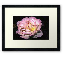 Dusky beauty Framed Print