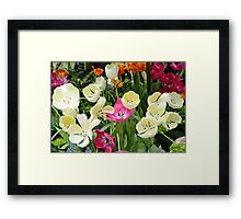 Open Tulips Framed Print