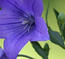 Purple summer flower Sticker