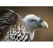 Vulture Photographic Print