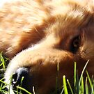 Close up Dog by Samantha Nielsen