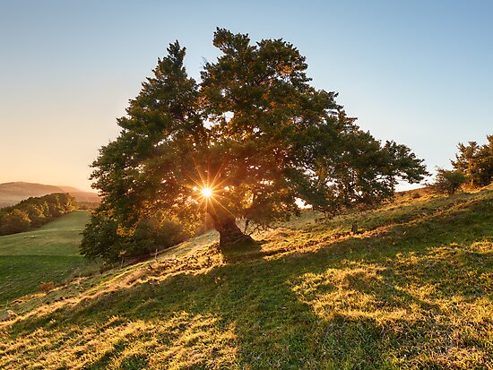Sun Tree by Michael Breitung