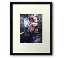 The Coral and the Shrimp Framed Print