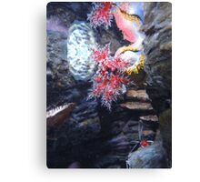 The Coral and the Shrimp Canvas Print