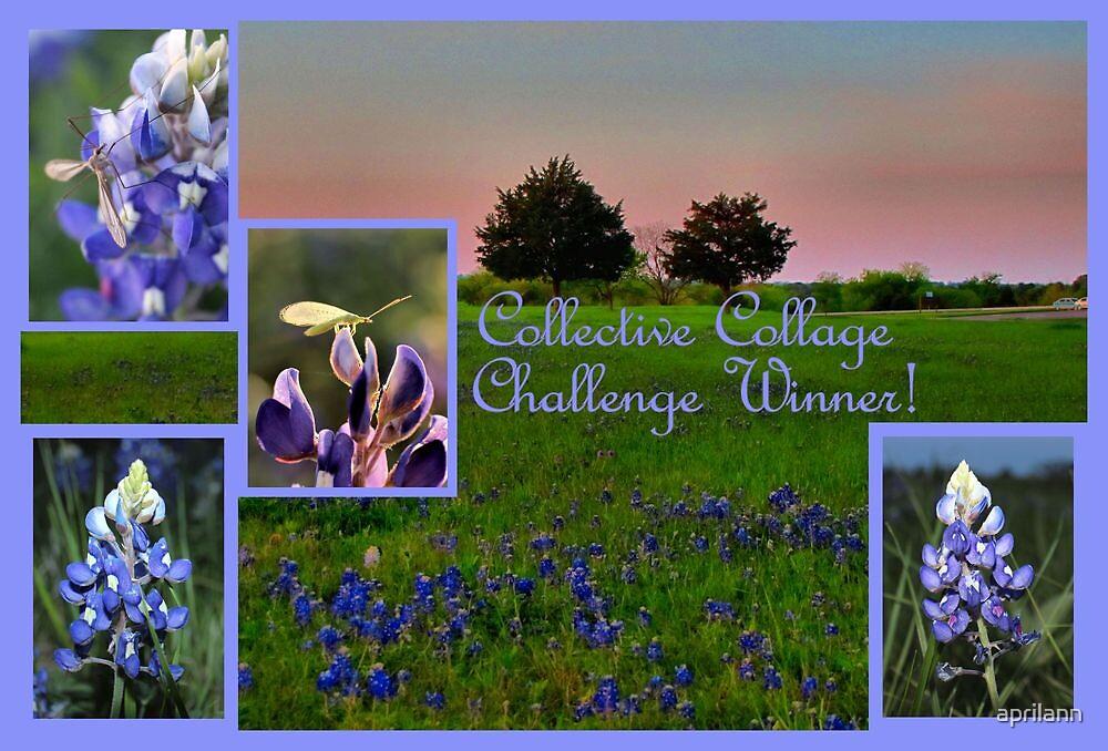 Banner - CC - Challenge Winner by aprilann