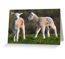 Springtime Lambs Greeting Card