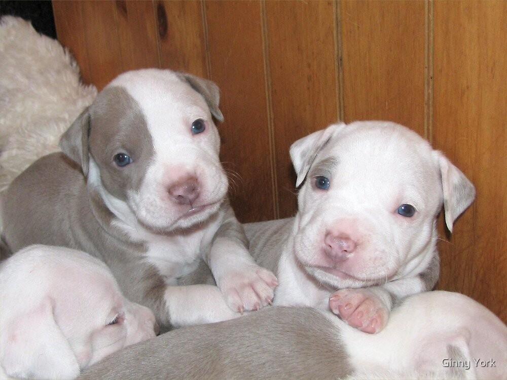 New Pups On The Block by Ginny York