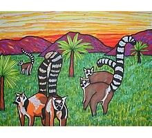 Lemurs in the grass Photographic Print