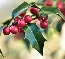 Holly Holy  by Poete100