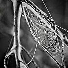 Spider Web by Jim Semonik