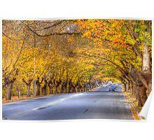 Hahndorf Autumn, Adelaide Hills, SA Poster