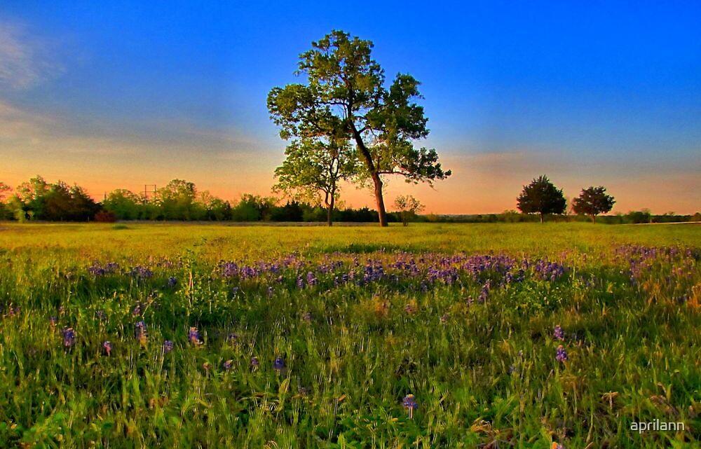 Bluebonnet Fields in Texas by aprilann