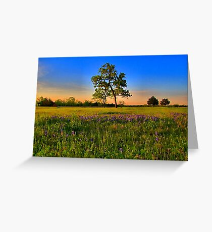 Bluebonnet Fields in Texas Greeting Card