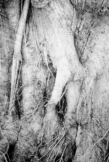Mandrake Tree by olga zamora