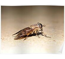 Horse Fly Poster