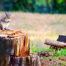 Morning Spring Time Squirrel  by georgiaart1974