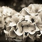 Vintage Style Hydrangea by Linda Makiej