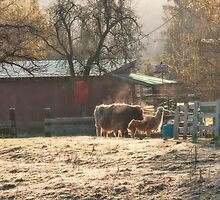 Morning Farmyard 2 by Tracy Riddell