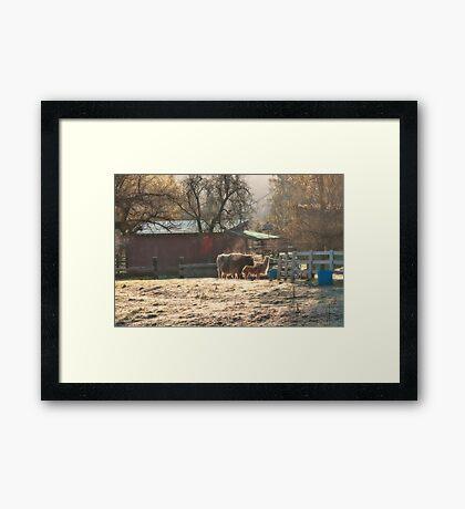 Morning Farmyard 2 Framed Print