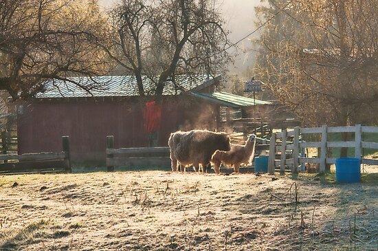 Morning Farmyard 2 by Tracy Riddell