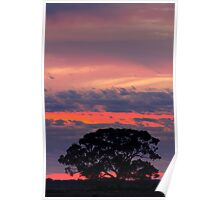 Hay Plains Sunrise Poster