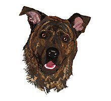 Tuko Brindle Mastif Photographic Print