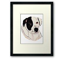 Bandit Pitbull Cross Rescue Framed Print