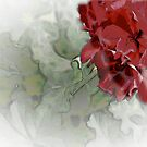 The Beauty in a Geranium  by Sherry Hallemeier