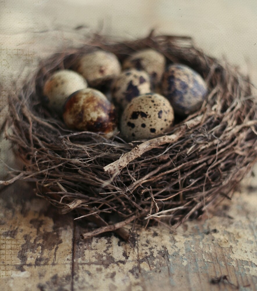 nest with eggs by passerby2