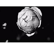 Roseball Photographic Print